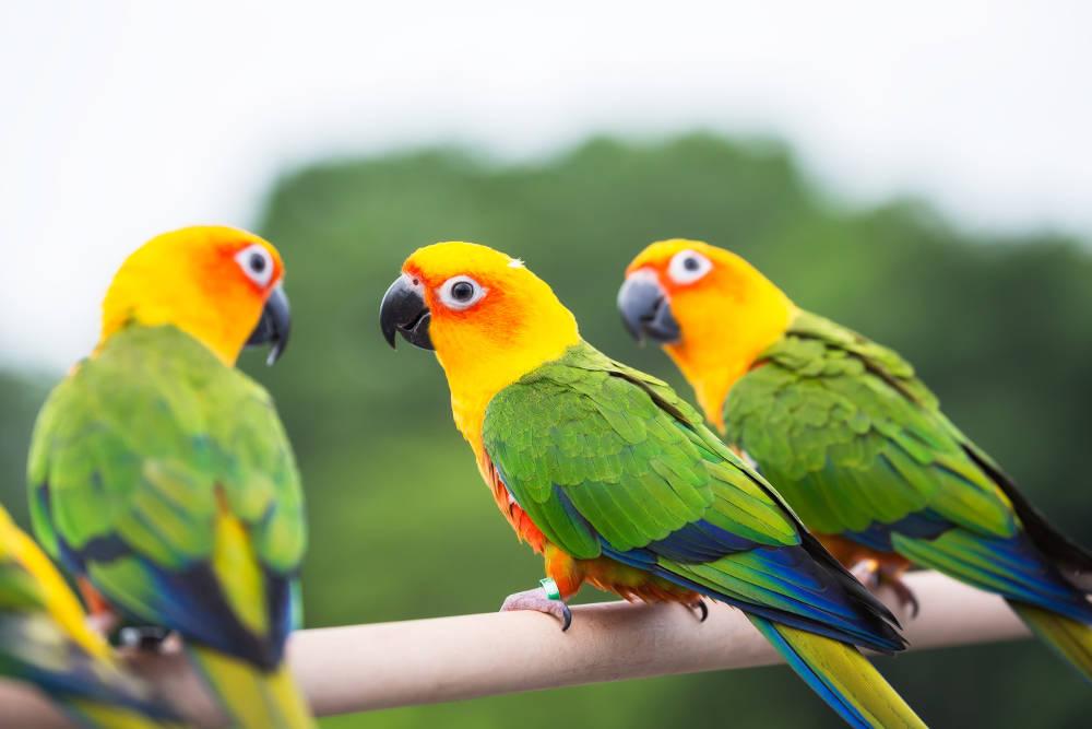 Le perroquet: cette GRANDE responsabilité - Parrot Wildlife Foundation